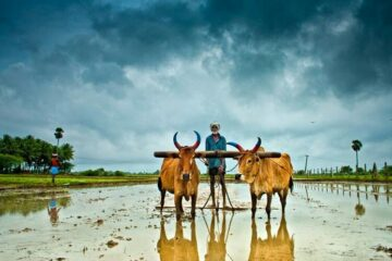 Animal Agriculture in India